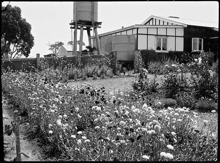 pine-range-australian-capital-territory-1935-natl-library-of-australia
