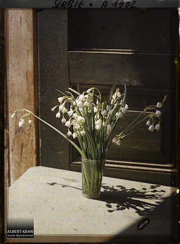 In a vase on monday snowdrops enclos ure for Al kahn